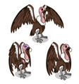 three vultures with spread wings common and sick vector image vector image