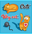 cat playing with a ball and sleeping cat vector image
