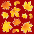 Collection autumn leaves vector image vector image