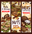 sketch banner of nuts and fruit beans seeds vector image