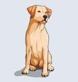cute beige labrador retriever dog sitting vector image