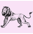 lion walking vector image