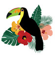 toucan bird vector image