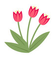 bouquet pink tulips icon flat style isolated vector image vector image