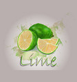 lime watercolor food vector image