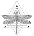 dragonfly over sacred geometry sign isolated vector image vector image