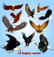 set eagles in flight in sky vector image vector image