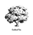 sketch tree vector image vector image