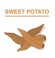 sweet potato isolated on white background vector image