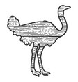 wooden ostrich bird silhouette sketch vector image