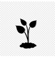black silhouette of sprouting plant in the soil vector image vector image