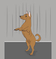 dog in the room vector image vector image