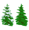 Pine tree in winter and summer on white vector image vector image