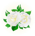 two white roses festive background vintage vector image vector image