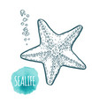 starfish drawing on white background hand drawn vector image