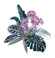 botanical beautiful tropical flowers vector image vector image