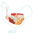 chicken anatomy digestive system vector image vector image