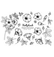 collection set of hollyhock flower and leaves vector image vector image