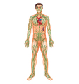 Lymphatic System vector image vector image