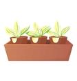Plants in pots icon cartoon style vector image vector image