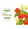 Greeting card with flowers spathiphyllum and vector image vector image