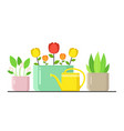 plants in pots with watering can urban home green vector image vector image