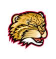 manul or pallas cat head mascot vector image vector image