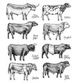 farm cattle bulls and cows different breeds of vector image vector image