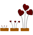 Love growing vector image vector image