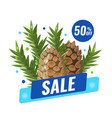 winter sale banner with with pine cone and fir vector image vector image