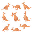 cute brown kangaroo set wallaby australian animal vector image vector image