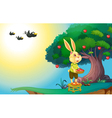 rabbit in nature vector image vector image