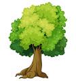Single tree vector image