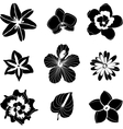 tropical flowers set vector image vector image