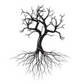 dry olive tree with roots vector image