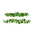 green climbing ivy creeper branches isolated vector image