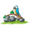 isolated picture cute parrot vector image vector image