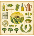Vintage colorful olive harvest set vector image vector image