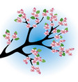 peach blossoms vector image