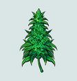 cannabis leaf plant medical vector image