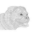 german boxer american bulldog adult coloring page vector image vector image