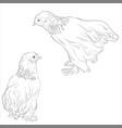sketch chickens vector image vector image