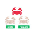 difference between male and female crabs vector image vector image
