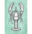 lobster ink sketch on old paper vector image