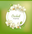 orchid round frame green background vector image