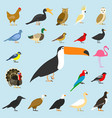 big set of tropical domestic and other birds vector image vector image