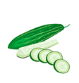 Delicious Fresh Marrow Slices on White Background vector image