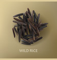 grains of wild black rice vector image