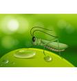 Grasshopper on green leaf vector image vector image