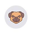 mascot bull dog vector image vector image